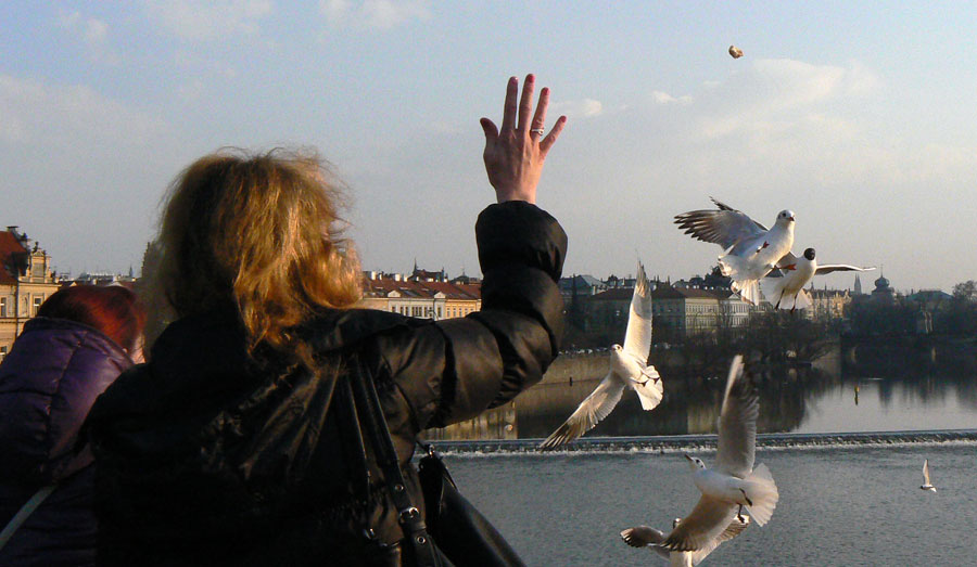 Möwenfütterung auf der Karlsbrücke