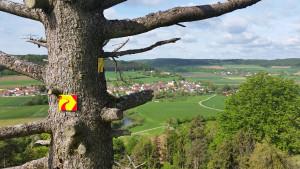 Altmühltal-Panoramaweg - Gungoldinger Wacholderheide