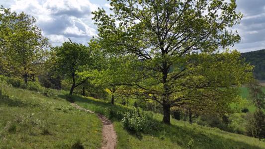 Gungoldinger Wacholderheide - Altmühltal-Panoramaweg