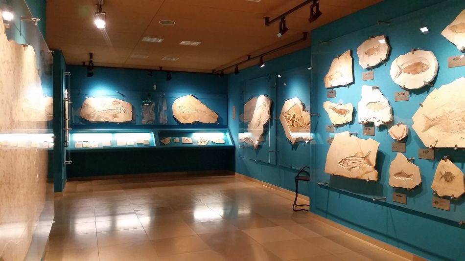 Bürgermeister-Müller-Museum Solnhofen Fossilien