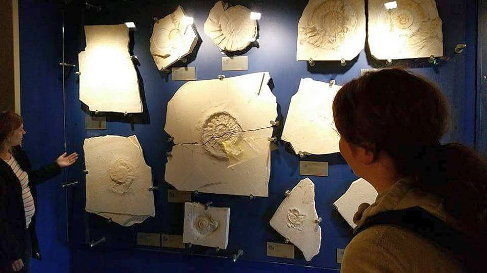 Fossilien Altmühltal Bürgermeister-Müller-Museum Solnhofen