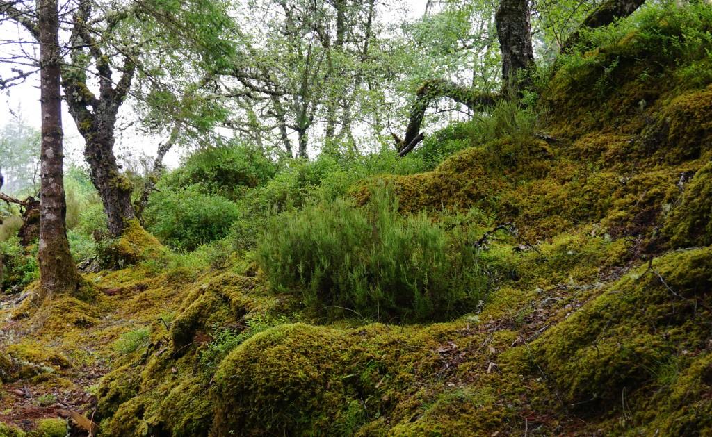 Falls of Shin - Schottland