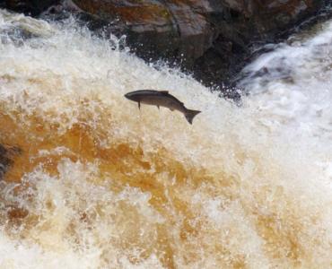 Falls of Shin – Schottland