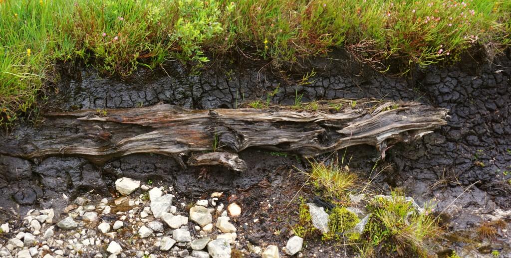 Glencoe Valley - Schottland - Bridge of Orchy (16)